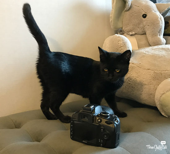 black cat with camera