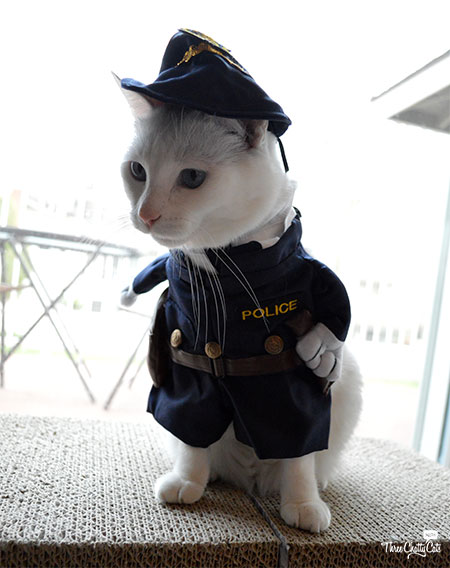 white cat in police uniform