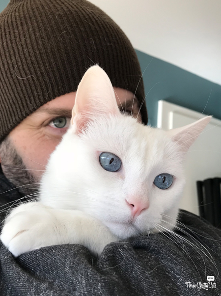 white cat with cat dad