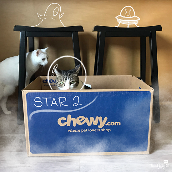 white cat and tabby cat space adventure