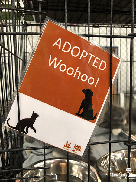 adopted sign at adoption event