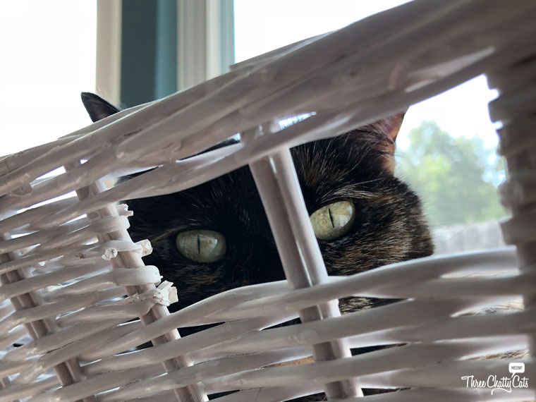 tortie cat peeking from basket