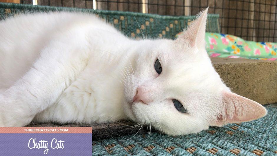 adorable white cat in catio