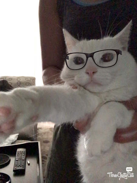 adorable white cat with glasses taking selfie