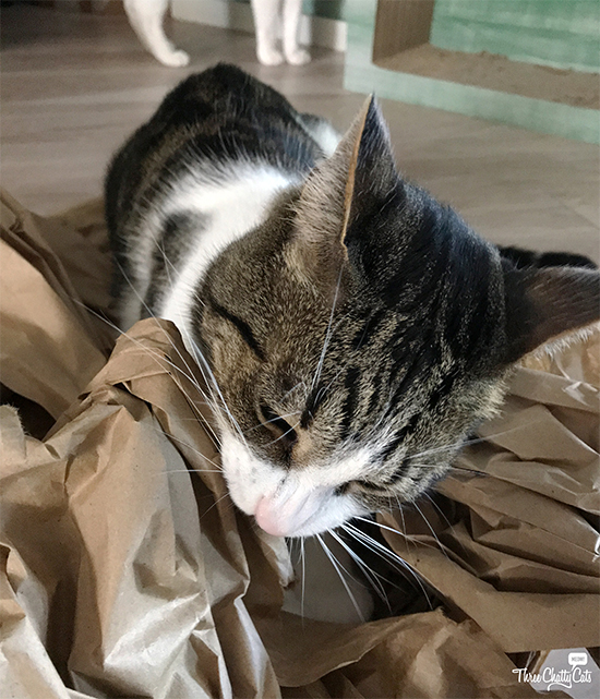 tabby cat playing with packing paper