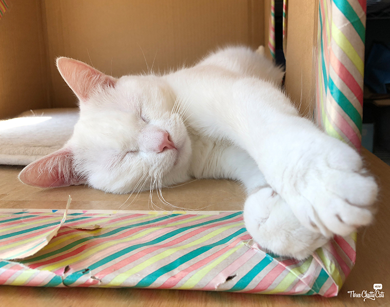 adorable white cat sleeping in box