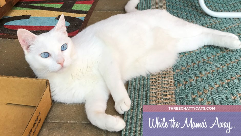 white cat in catio