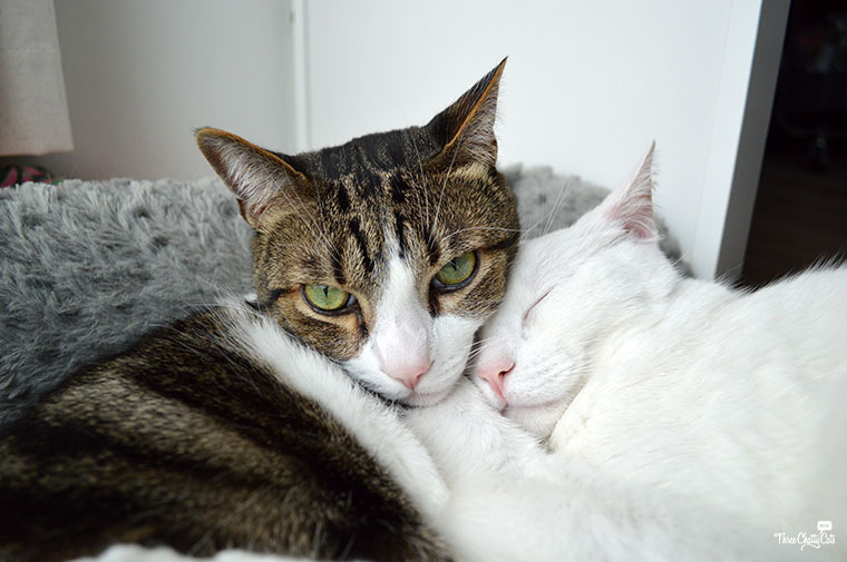 two cuddling cats