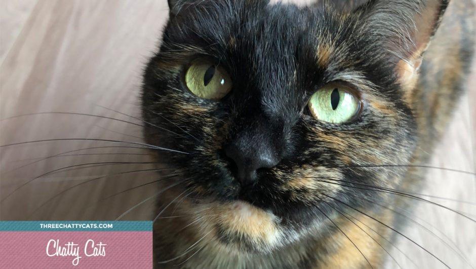 Chatty Cat Olive, adorable tortie