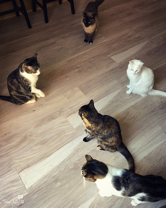 a group meeting of cats
