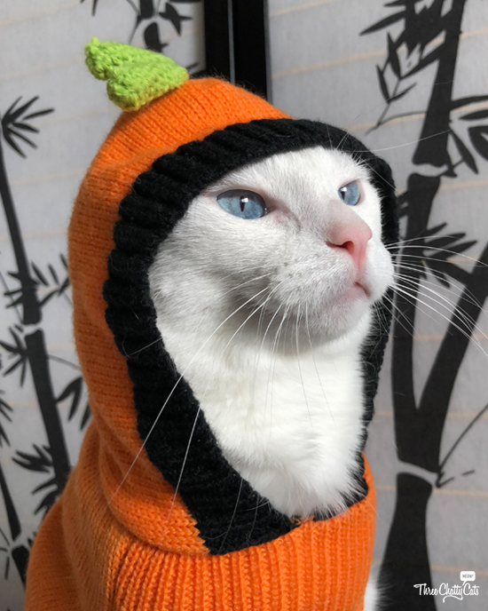 white cat in Halloween sweater