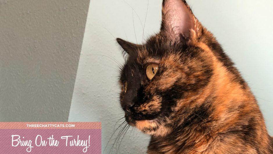tortie cat wants turkey