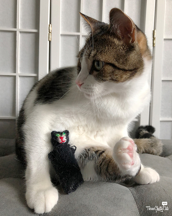cute tabby cat with cat toy
