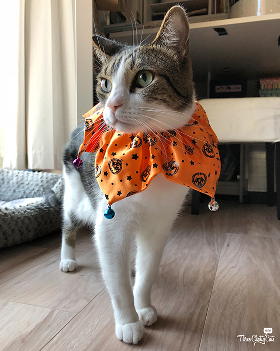tabby cat in halloween jester collar