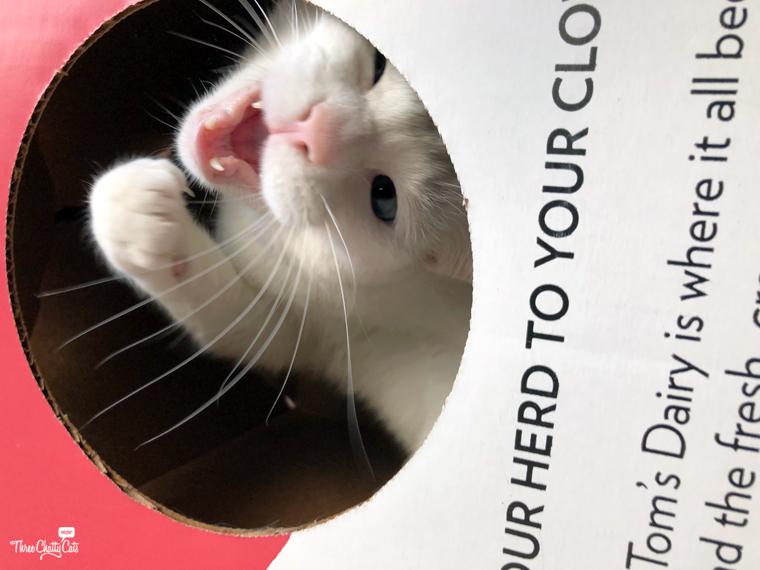 blooper Cat in the Box shot
