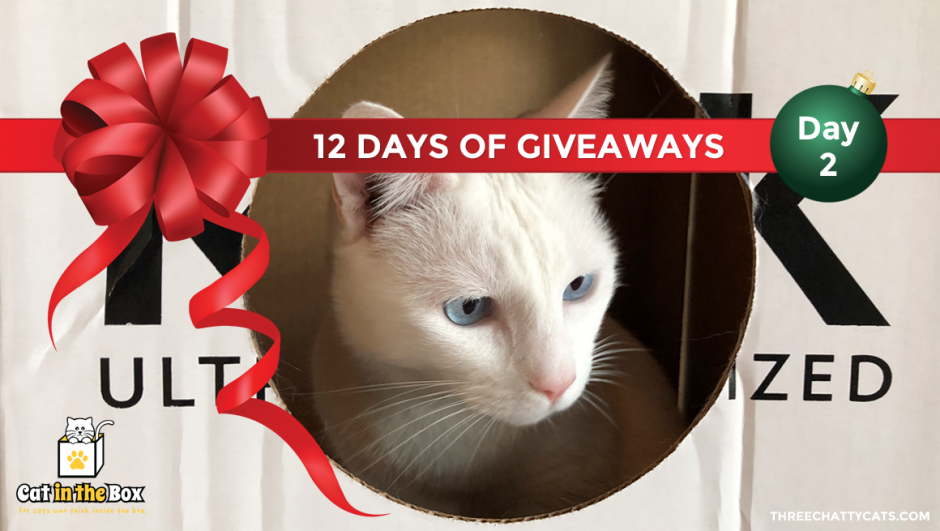 Cat in the Box | 12 Days of Giveaways
