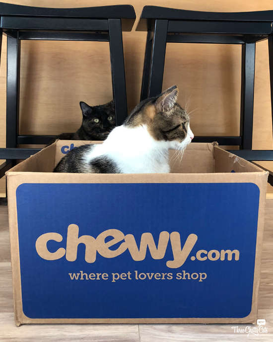 tabby cat in #ChewyBox