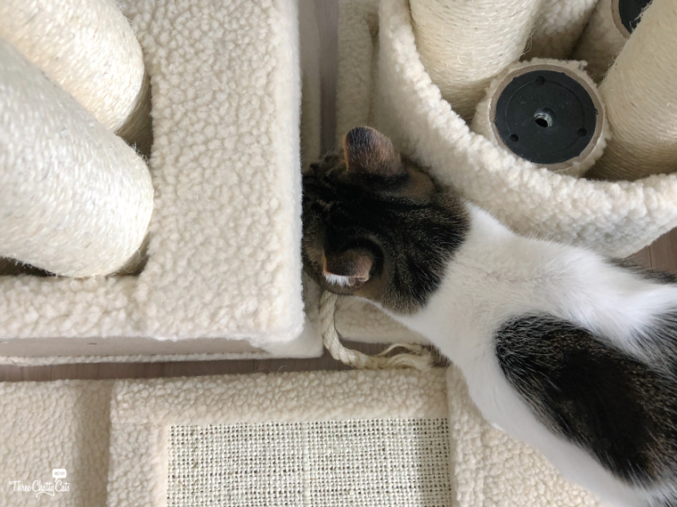 tabby cat investigates pieces of cat tree