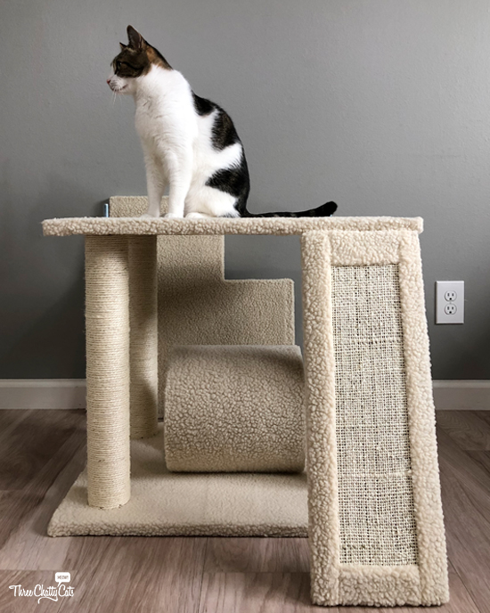 tabby cat tests out half built cat tree