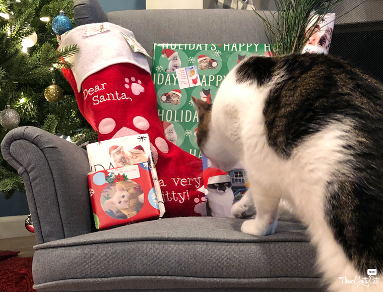 tabby cat with Christmas presents