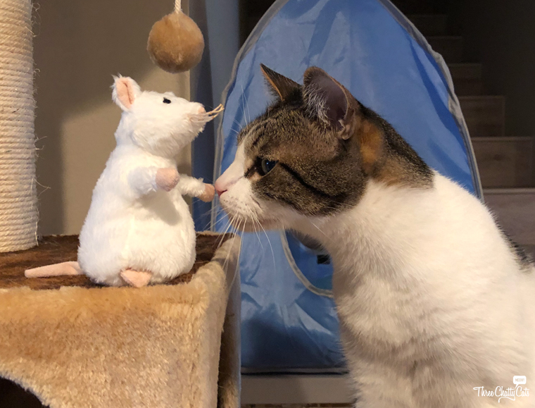 tabby cat and toy mouse