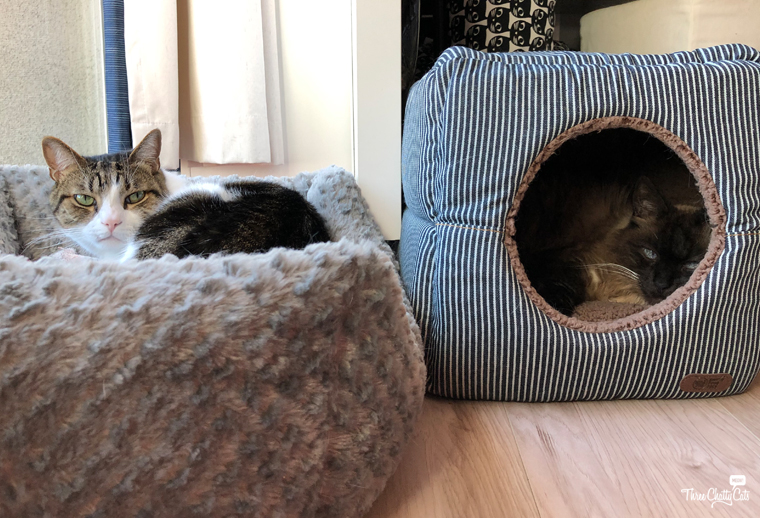 tabby cat in bed and Siamese cat in 2-in-1 Cat Cube & Bed from Smiling Paws Pets