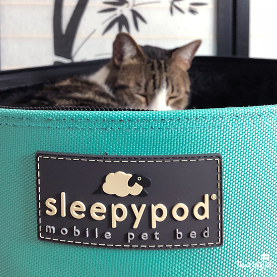 tabby cat sleeping in Sleepypod Mobile Pet Bed