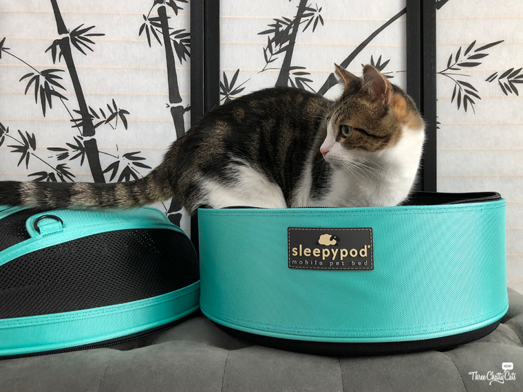 tabby cat checks out the Sleepypod Mobile Pet Bed
