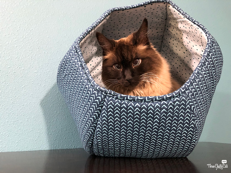Siamese cat enjoys The Cat Ball