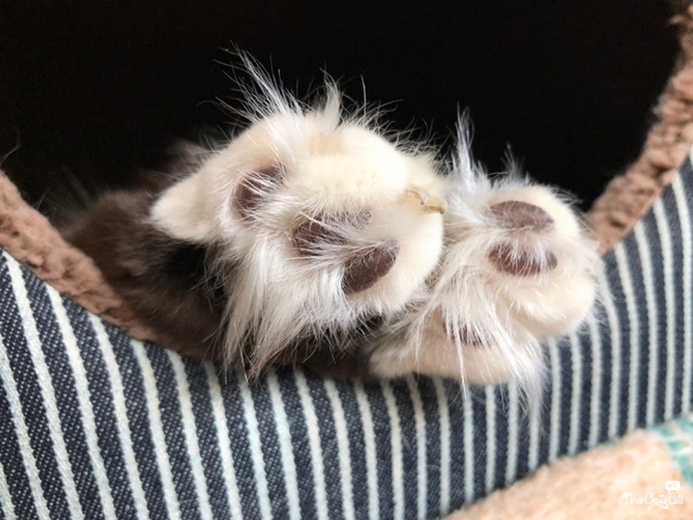 paws sticking out of 2-in-1 Cat Cube & Bed from Smiling Paws Pets