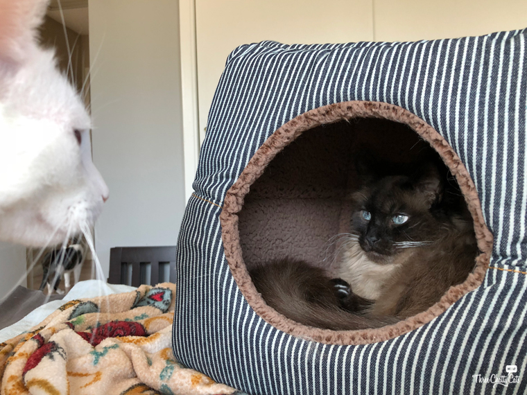Siamese cat in 2-in-1 Cat Cube & Bed from Smiling Paws Pets