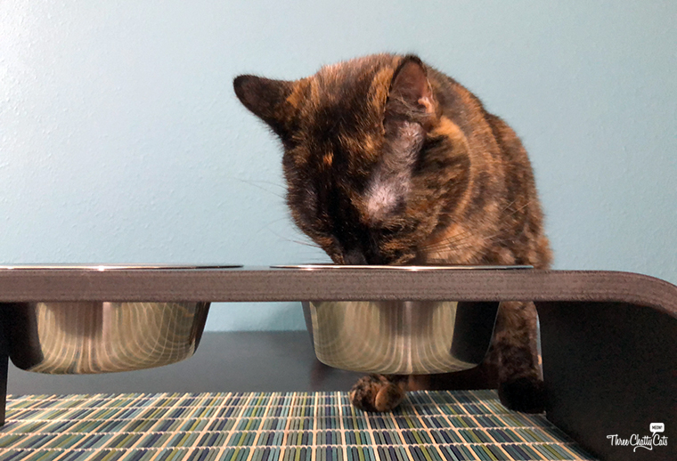 tortie cat eating from elevated feeder