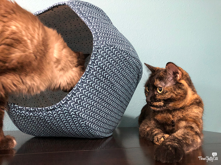 Siamese cat investigates The Cat Ball