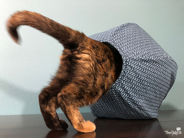tortie cat investigates The Cat Ball