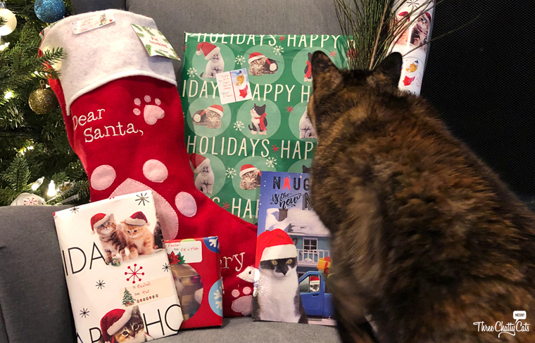 tortie cat with Christmas presents