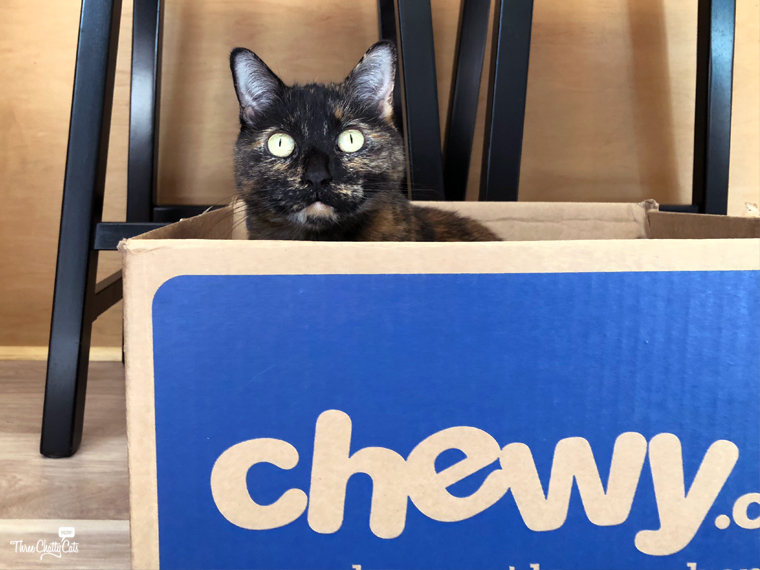 tortie cat in #ChewyBox