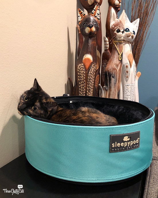 tortie in Sleepypod Mobile Pet Bed