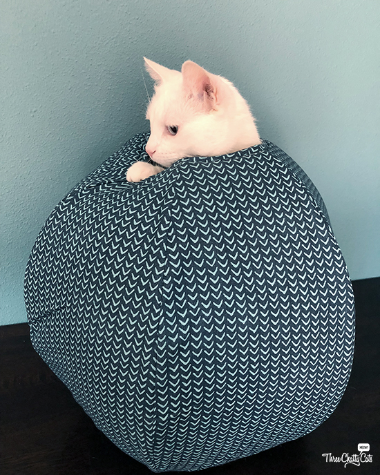 white cat figures out The Cat Ball