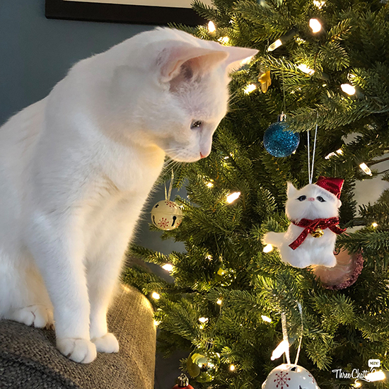 white cat chomping Christmas ornament