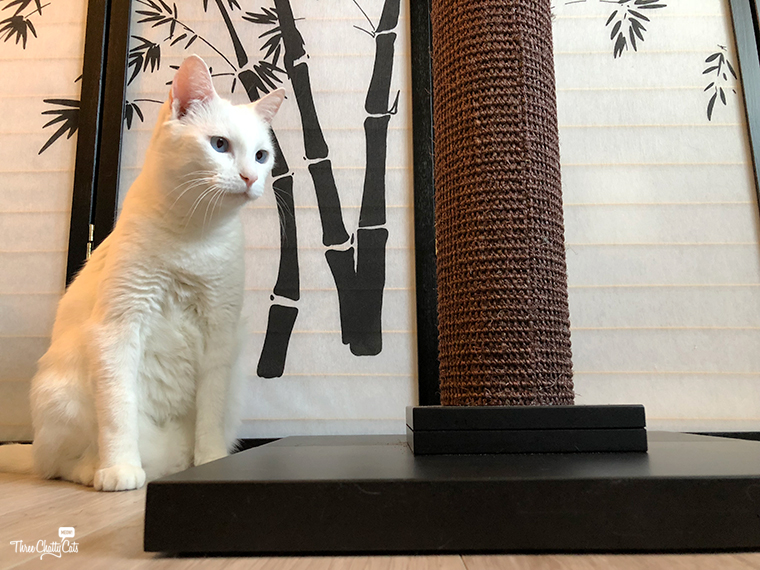 white cat looking at scratching post from Art of Paws