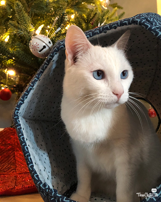 white cat sits in The Cat Ball by Christmas tree