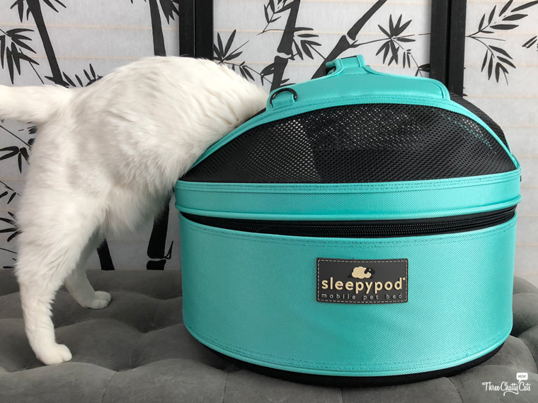 white cat investigates the Sleepypod Mobile Pet Bed