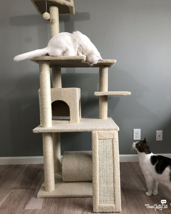 white cat in cat tree looking at tabby cat