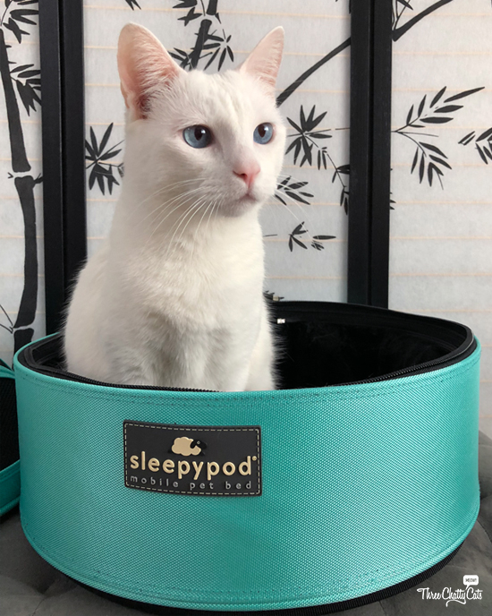 white cat sitting in Sleepypod Mobile Pet Bed