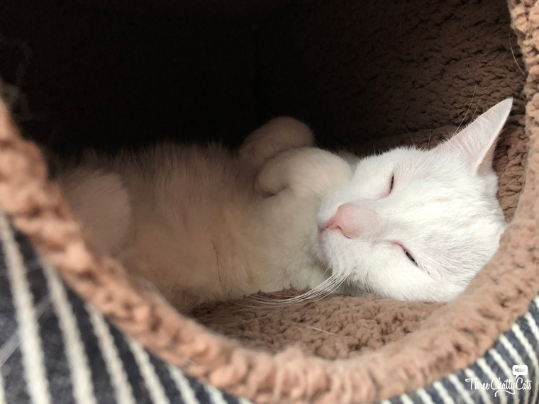 cute white cat sleeping in cat cute