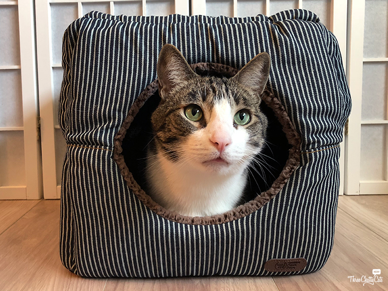 tabby cat inside cat cube bed