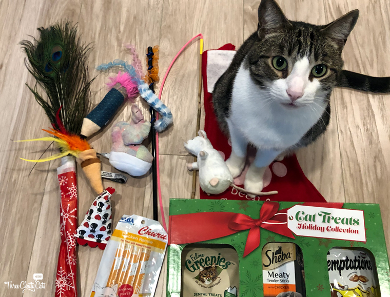 tabby cat with his Christmas presents