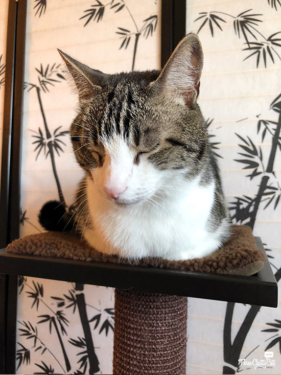 tabby cat sitting on scratching post from Art of Paws