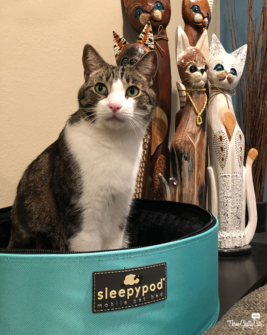 tabby cat ready to go out in his Sleepypod Mobile Pet Bed!