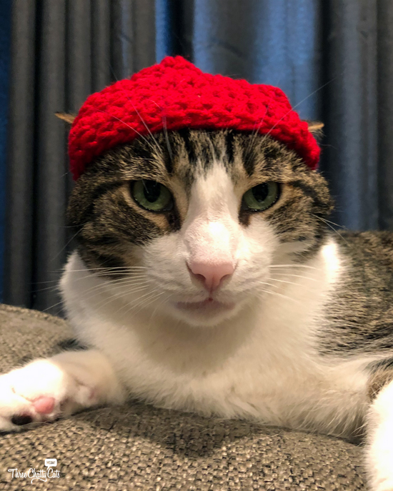tabby cat in hat #catsinhats